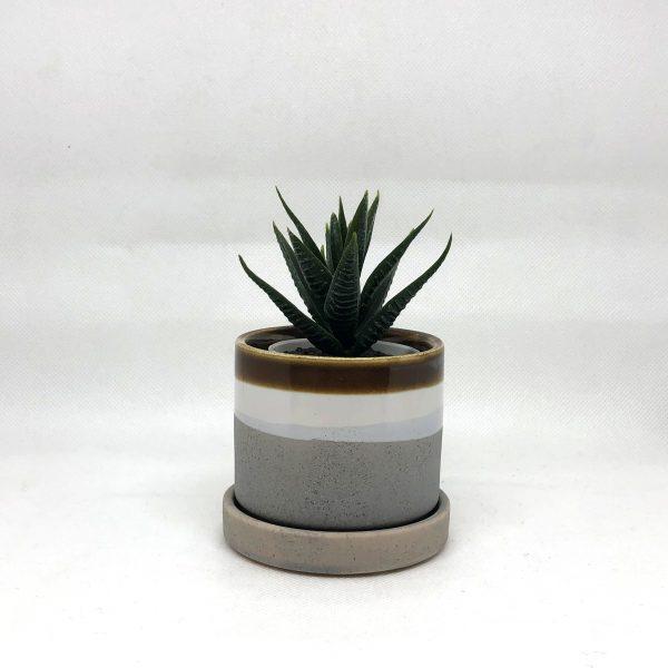 Chive_Small_Mocha Cement